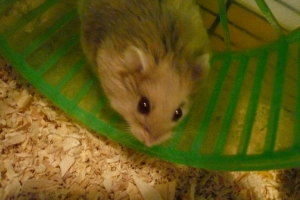 I'm in my wheel, watching you...